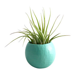 Mini Air Plant Container Pod - Aqua // - These mini air plant pods are natural pods that have been handpainted and repurposed into a planter so each pod is unique and organic in size/shape. The natural vessels make great displays for air plants. The plant pods would look great displayed along a shelf, desk, or window sill.