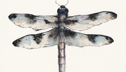Male Common Whitetail Dragonfly archival print by amberalexander