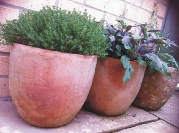 Terracotta Herb Pots