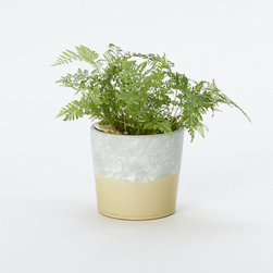 Color-block Pot, Neutral - This color-block planter is nice enough for the table.