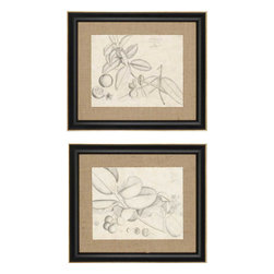 Paragon - Leaf Study II PK/2 - Framed Art - Each product is custom made upon order so there might be small variations from the picture displayed. No two pieces are exactly alike.