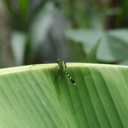 Roweboat Art Inc - Dragonfly On Green Leaf, Eco-Imagery, 10X10 - Photography created by artist Robin Rowe