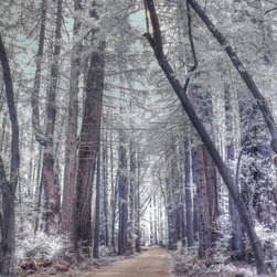Peaceful Path - This infrared photo of a  peaceful path lined with California redwood trees  will surely calm your spirit.  Bring the WOOD element into your Feng Shui style.
