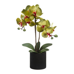 Silk Plants Direct - Silk Plants Direct Phalaenopsis Orchid Plant (Pack of 6) - Green - Silk Plants Direct specializes in manufacturing, design and supply of the most life-like, premium quality artificial plants, trees, flowers, arrangements, topiaries and containers for home, office and commercial use. Our Phalaenopsis Orchid Plant includes the following: