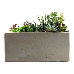 Rough Fusion - Rectangular Concrete Planter - This concrete planter has a simple, minimalist design and is the perfect planter for a grouping of succulents. The planter is in natural concrete color and has a classic concrete structure. Succulents not included.