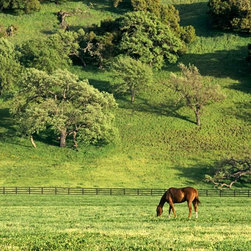 Murals Your Way - Grazing Wall Art - As a sleek brown horse grazes in a fenced pasture, a lushly green hill rises sharply in the background