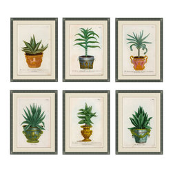 Small Planters - Set of 6 Framed Giclees - A classic set of botanical prints with antique pots lends an elegant touch to any entry way or living area. For those who love nature but need less maintenance. Adorn your walls with this luscious set of 6 exquisitely detailed and framed pieces of art, each one uniquely beautiful and colored in hues of deep greens and gold's.