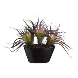 Silk Plants Direct - Silk Plants Direct Tillandsia Cactus (Pack of 1) - Silk Plants Direct specializes in manufacturing, design and supply of the most life-like, premium quality artificial plants, trees, flowers, arrangements, topiaries and containers for home, office and commercial use. Our Tillandsia Cactus includes the following: