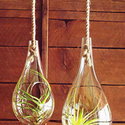 Glass Hanging Terrariums - Terrariums and air plants (tillandsia) are super hot right now in the gardening world. I love that these terrariums are made from recycled glass, as that gives them an eco-friendly bent too.