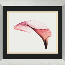 """Giant Calla"" Framed Print by Steven N. Meyers"