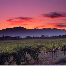 Walls 360, Inc. - Vineyard At Sunset, Napa Valley Panoramic Fabric Wall Mural - Transform your empty walls with Walls 360's premium, repositionable wall graphics.