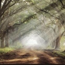 Artcom - Evergreen Plantation by Mike Jones - Evergreen Plantation by Mike Jones is a Stretched Canvas Print.