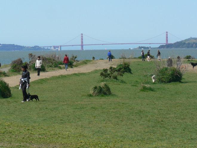 Dog Park Berkely