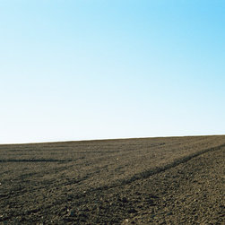 """Field #4 - C-print, unmanipulated transparency film image, 20""""x30"""" image size, 24""""x34"""" paper size, edition of three c-prints, edition of three pigment prints. Signed, numbered and captioned in ink on the verso."""