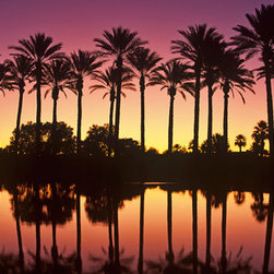 Murals Your Way - Palm Desert Sunset Wall Art - This panoramic photograph of a pink-hued tropical sunset features a row of palm trees along a waterway