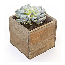 "luludi living frames - Luludi Living Frames Palavo Succulent - Our palavo succulent contains a pre-planted easy-care succulent blossom set inside an unstained flat bottomed box ideal for indoor or outdoor use. Set it upon a windowsill or create an arrangement of multiple boxes as a tabletop centerpiece for your next party, available as shown or may be custom-tailored, dimensions: 6"" width x 6"" height x 6"" depth, weight (approx): 1 lbs, each garden is a unique landscape so finished pieces may vary, Suggestion for care:, succulents thrive in bright light, confirm soil is dry before watering, keep in mind cacti are potted in a sandy soil sand is powdery when dry and holds together when moist, most cacti use a lot of water during spring and summer and hardly any thru winter"