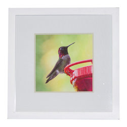 "Andrea Reider Photography - Hummingbird at Feeder After the Rain, 4"" x 6"" Print with 6"" x 8"" White Frame - This hummingbird photograph is from my ""Broad-Winged Hummingbirds of West Hollywood"" series. The photos resulted mostly from a lot of patience and learning to ""think like a hummingbird."""