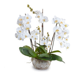 New Growth Designs - White Phalaenopsis Orchid Arrangement - Definitely not a hothouse flower, this particularly lovely orchid is actually a stunning reproduction that can move about your house with an insouciance that natural orchids couldn't imitate. You can count on this lifelike and steadfastly blooming plant to outlast even the most pampered of houseplants.