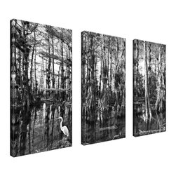 Ready2HangArt - Ready2HangArt Bruce Bain 'Cypress Swamp' 3-piece Set Canvas Wall Art - This beautiful 3-piece canvas wall art is from photographer Bruce Bain. His work employs elements of imagination to capture a variety of subjects. It is fully finished, arriving ready to hang on the wall of your choice.