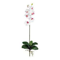 Nearly Natural - Phalaenopsis Stem (Set of 12) - Majestic in stature, yet delicate in form, this beautiful Phalaenopsis Orchid personifies exactly why orchids are so sought after. The crisp green stalk bursts forth from a leafy base and stands straight as an arrow, while the delicate blooms lightly grace the plant's upper echelons. Available in several colors, these beautiful orchids make a perfect gift.