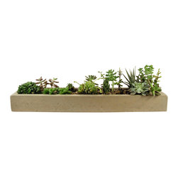 "Rough Fusion - Long Concrete Tray 24"" - This modern planter is perfect for a display of succulents and adds interest to any centerpiece or table setting."