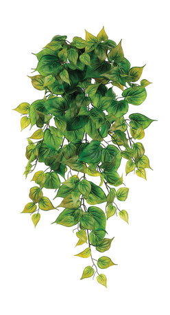Silk Plants Direct - Silk Plants Direct Philodendron Vine Hanging Plant (Pack of 6) - Pack of 6. Silk Plants Direct specializes in manufacturing, design and supply of the most life-like, premium quality artificial plants, trees, flowers, arrangements, topiaries and containers for home, office and commercial use. Our Philodendron Vine Hanging Plant includes the following: