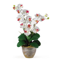 Nearly Natural - Double Stem Phalaenopsis Silk Orchid Arrangement - This 25 inch double stem phalaenopsis silk orchid plant is nothing short of an explosion of color. Expertly arranged, this piece was designed to enhance any space. Each plant comes stacked with two amazing phalaenopsis stems each with 6 flowers and 2 buds. Finished with a gorgeous glazed ceramic vase this item is not to be missed. So whether you're looking for a gift or just want to perfect your decor...you're only one click away. Color: White, Height: 25', Vase: H 5-1/2' W 7'