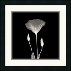 Amanti Art - Poppy in Lace Framed Print - By using x-rays instead of light, an inner vision is revealed, allowing nature to show textures, details, and shadows that would otherwise not be seen.