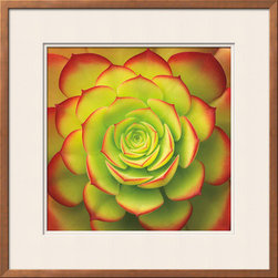 Artcom - Fiery Succulent by Jan Bell - Fiery Succulent by Jan Bell is a Framed Art Print set with a RAMINO Bronze Thin wood frame and Soft White and Soft White matting.