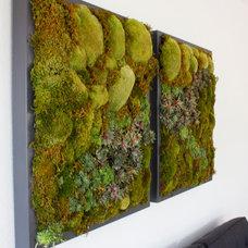 Modern Plants by Articulture Designs, LLC
