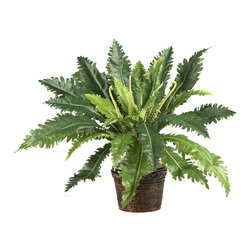 """Nearly Natural - Marginatum with Wicker Basket Silk Plant - This jungle-like fern adds a sense of flair and excitement to any room it occupies. The elongated jagged shaped leaves give this plant a unique look all its own. Standing 22"""" inches tall, this rare fern is the ideal size for an apartment or small office setting. A lacquered wicker basket surrounded by a rope shaped trim design is the ideal finishing touch to this one of a kind plant. Colors: Green; Pot Size: W: 7 in, H: 5.75 in. Height: 22 in; Width: 25 in; Depth: 25 in."""