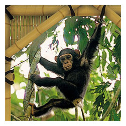 Brewster Home Fashions - Monkey Jungle Treehouse Prepasted Large Wall Mural Accent - Features:
