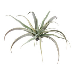 Silk Plants Direct - Silk Plants Direct Tillandsia (Pack of 24) - Silk Plants Direct specializes in manufacturing, design and supply of the most life-like, premium quality artificial plants, trees, flowers, arrangements, topiaries and containers for home, office and commercial use. Our Tillandsia includes the following: