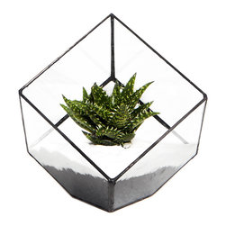 Jack London Square Terrarium - For the geometry lover in you, this cube sits comfortably on its corner and makes the perfect modern addition to your home or office.