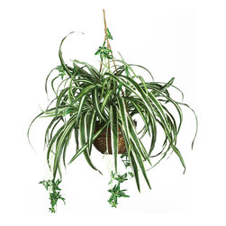 Nearly Natural - Spider Hanging Basket Silk Plant - Want a plant that expresses your carefree personality and style? This uniquely crafted spider hanging basket silk plant is the ideal choice for lighthearted souls. Long wispy foliage extends well beyond the wicker container, and the lush green leaves highlighted with a cream colored pin stripe are sure to satisfy even the most meticulous of critics. An assortment of tiny plantlets graces both ends of this magnificent creation.