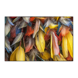 Plumes Of Color, Limited Edition, Photograph - A collection of colorful feathers from the birds of the sacred valley in Peru