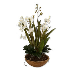 Silver Nest - Orchid Planter - Hand painted, natural brown dish garden of white moth orchids planted in permanent soil with mixed foliages from the orchid family
