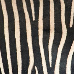 Walls 360, Inc. - Greveys Zebra Stripes Panoramic Fabric Wall Mural - Transform your empty walls with Walls 360's premium, repositionable wall graphics.