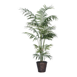 Vickerman - 6' Tropical Palm Deluxe - 6' Tropical Palm Deluxe in dark brown rattan basket with American made excelsior.