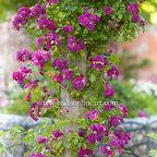 English Garden - © Michael Hudson/ HudsonFineArt.com