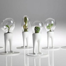 Modern Terrariums by Generate Design