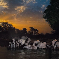 Magic Murals - Elephants at Watering Hole in Chad Wallpaper Wall Mural - Self-Adhesive - Multip - Elephants at Watering Hole in Chad Wall Mural