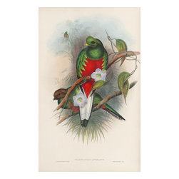 """Pharomacrus Antisianus Print - John Gould, regarded by many as the greatest bird artist and publisher in Britain, produced fifteen folio sets during his career. The book on view is dedicated to a tropical bird called the """"trogon."""" In his preface to the book, Gould wrote: """"If not strictly elegant in form, the Trogons in the brilliancy of their plumage are surpassed only by the Trochilidae [toucans]: their splendour amply compensates for every other defect."""" The illustrations for this work are some of the most magnificent that the ornithologist produced."""