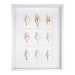 White Spindle Shells in White Shadowbox - They recall a sojourn to the shore, when the turning tide eclipsed the march of time, laughter lifted spirits, and the sea held sway as cares drifted to the far away. Nine white spindle shells are mounted within a white shadowbox frame in the White Spindle Shells in White Shadowbox. The monochromatic coloration of the piece accentuates the dainty beauty of the shells, allowing the loveliness of their unembellished form to remain the focus.
