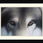 Amanti Art - Eyes of the Hunter: Gray Wolf Framed Print by Charles Alexander - Charles Alexander's hypnotizing portrait is beautiful right down to the finest detail. You may want to place it somewhere where it won't intimidate your guests while they eat.
