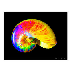 Ready2HangArt - Ready2hangart Bruce Bain 'Rainbow Shell' Canvas Wall Art - This beautiful canvas wall art is from photographer Bruce Bain. His work employs elements of imagination to capture a variety of subjects. It is fully finished, arriving ready to hang on the wall of your choice.