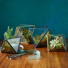 Contemporary Terrariums by West Elm
