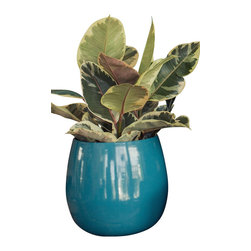 Spun Steel Planter, Large Taper - Lightweight and supremely colorful, these steel planters are a perfect cachepot for a houseplant or foundation for a succulent arrangement. Bright marine blue.