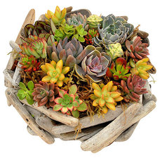 Traditional Plants by Flora Pacifica, Inc.