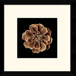 Amanti Art - Ruffles in Taupe Framed Print - Sepia tones and the rich detail of this floral accent piece will add a note of delicate sophistication to your decor.